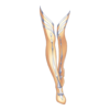 https://www.eldarya.de/assets/img/item/player//icon/8bb3b48d26cfc3be326cf34f88344210~1604524371.png